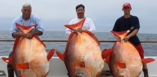 opah-warm-blooded-fish