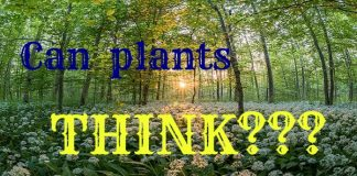 can plants think?